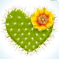Green heart shaped flowering cactus vector material