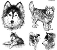 Hand painted Huskies illustrations vector material