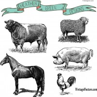 Hand painted farm animal vector material