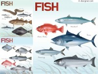 Realistic fish of underwater world vector diagram
