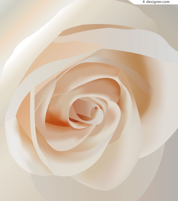 Realistic white rose close up vector material