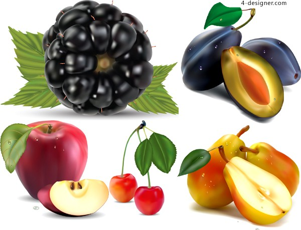 Various vector material of realistic drawing fruits