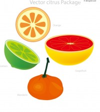 Vector material of delicious fruits
