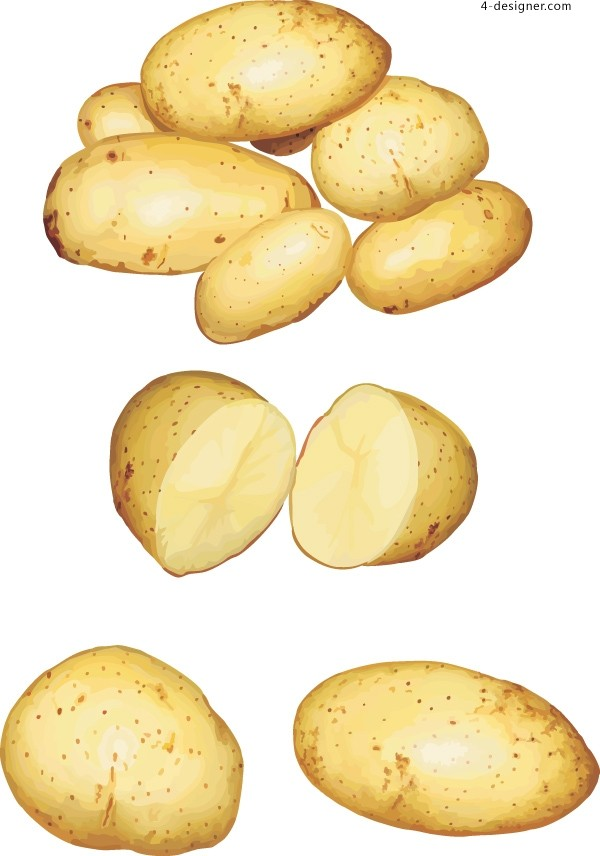 Vector material of potatoes with realistic style