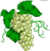 Vector material of realistic and tempting milk grape and green apple
