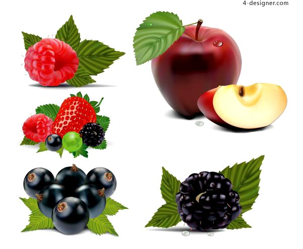 Vector material of realistic drawing fruits