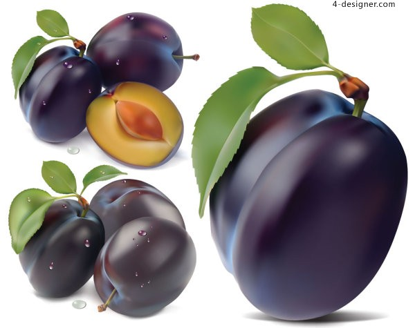 Vector material of realistic tempting plums
