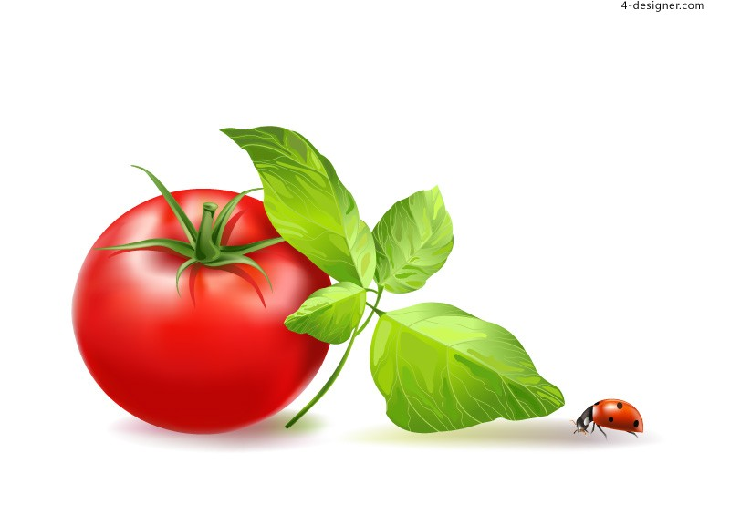 Vector material of tasty tomato