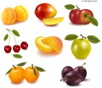 Vector material of tempting fruits