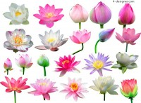 A variety of lotus collection HD pictures