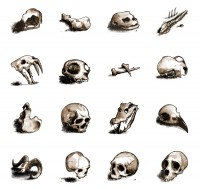 Hand painted icons of various skulls PNG 128x128px