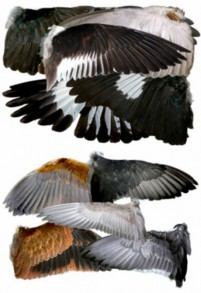 A variety of animal wings PSD material