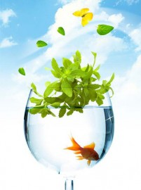 Fresh and clean little goldfish psd material