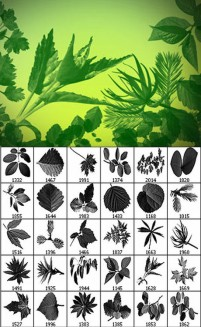 Variety of plant material leaf photoshop brushes