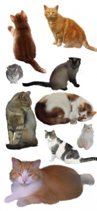 15 of the cute kitty png material