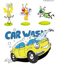 Insects and cars