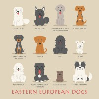 Eastern Europe Dog vector material