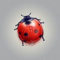 Ladybug cartoon cute little animals Meng Chong