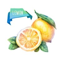 Watercolor yellow lemon vector