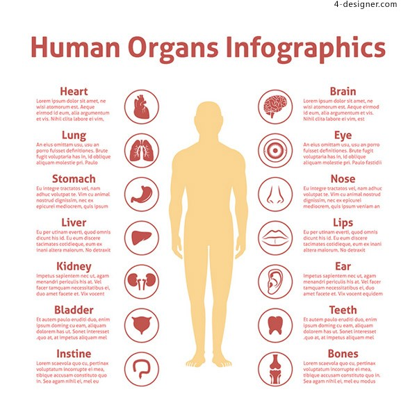 Human organ icon annotation