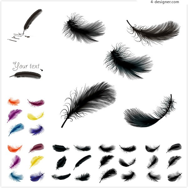 Color feather vector