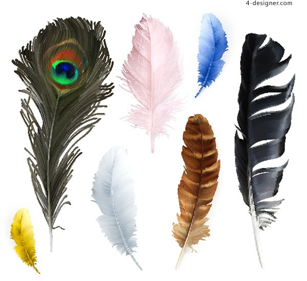 Feather vector of birds