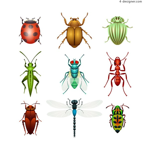 Vector of insect design