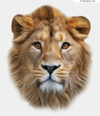 Realistic lion head vector