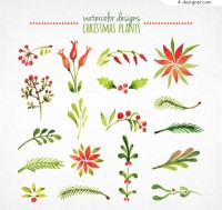 Watercolor Christmas plant vector