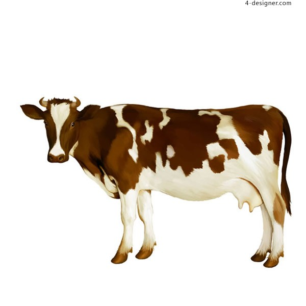 Watercolor brown white cow