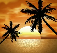 Coconut tree landscape vector
