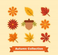 Fall plant collection