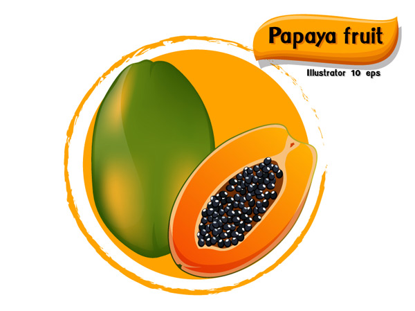 Delicious papaya vector