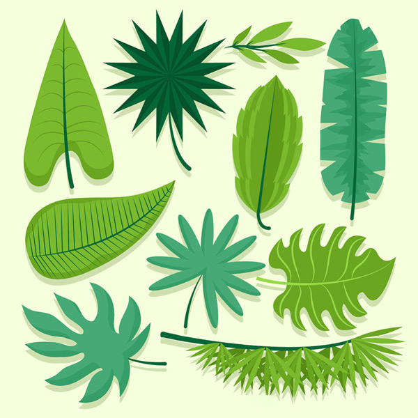 Green leaves of various shapes