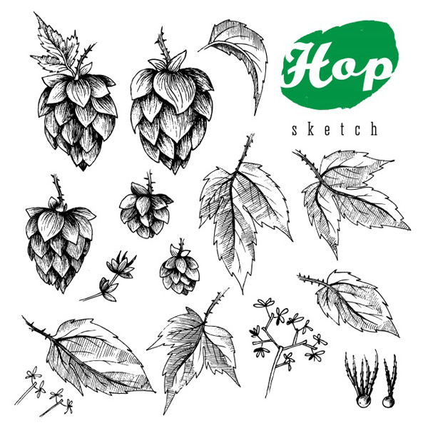 Hops ornamental plants