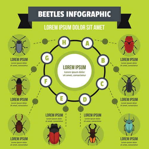 Insect information chart
