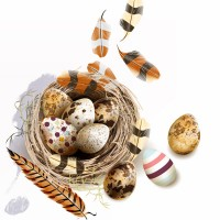 Nest eggs and feathers