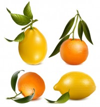 Orange and lemon vector
