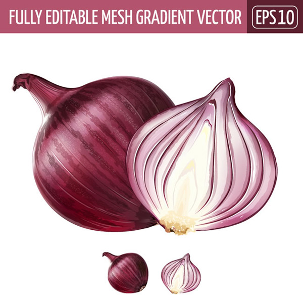 Purple onion vector