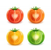 Tomatoes in different colors