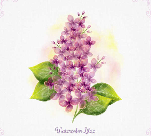 Water painted lilac
