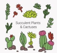 Cartoon succulents