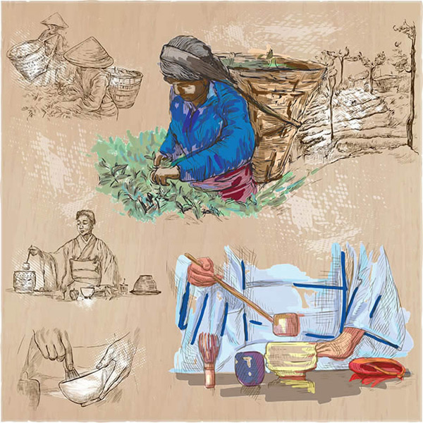Tea processing illustration