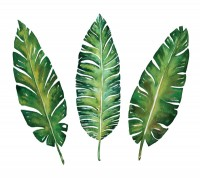Watercolor plant leaves